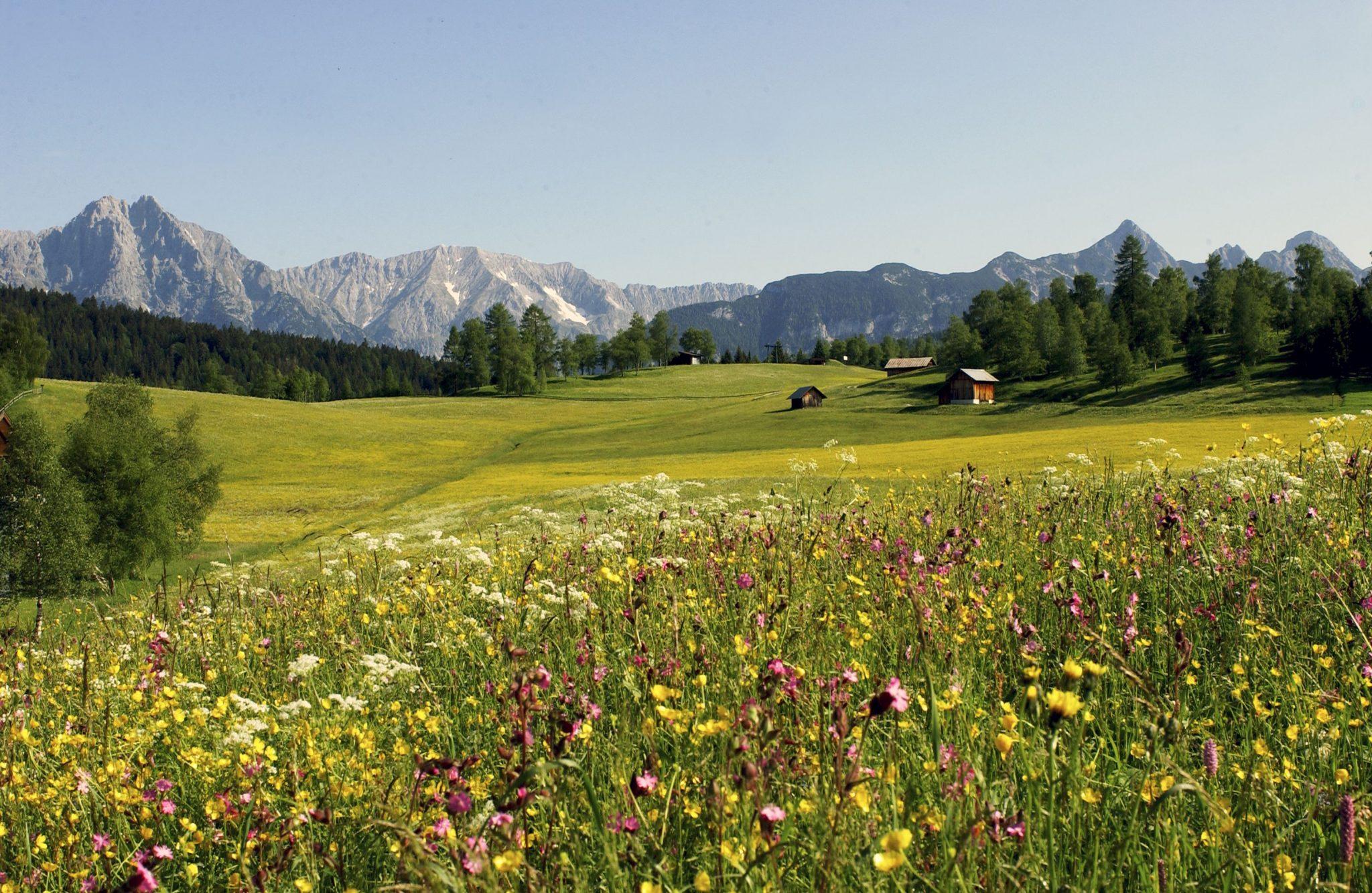 Geigenbühel bei Seefeld mit Blick auf das Wettersteingebirge, Foto: Olympiaregion Seefeld | Climbers Paradise