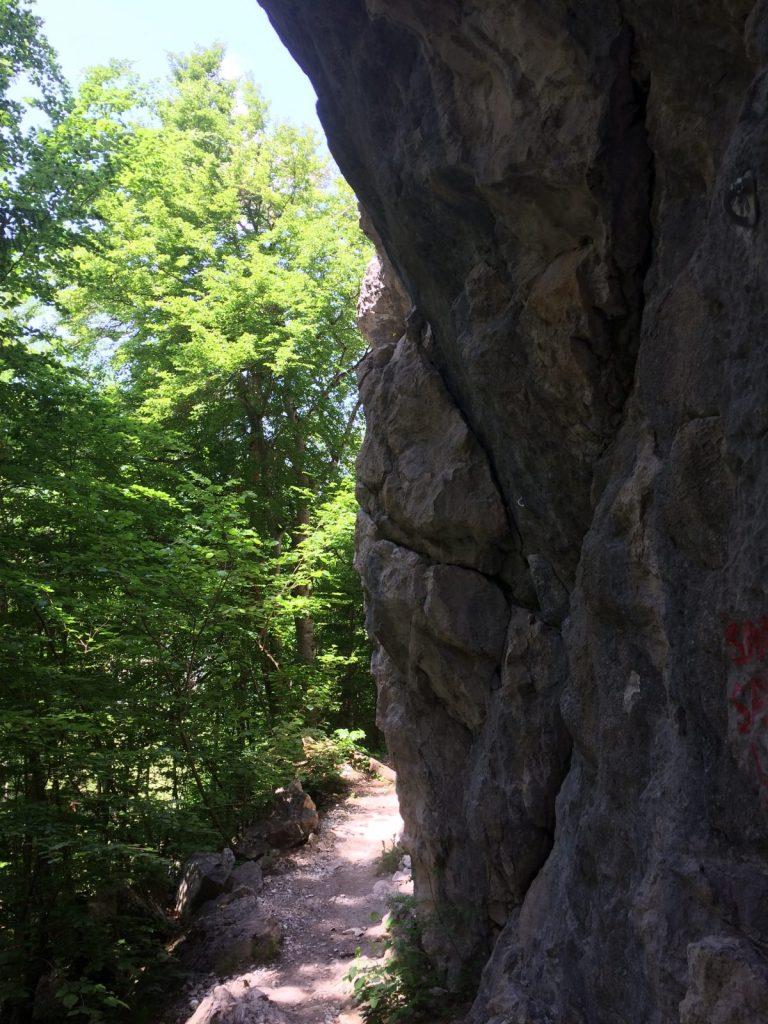 Im Klettergarten Kreithof | Climbers Paradise