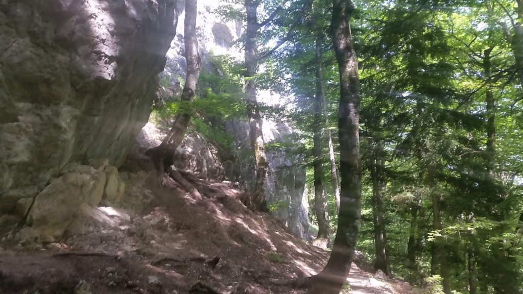 Schattige Plätze im Klettergarten Kreithof, trotz Südausrichtung | Climbers Paradise