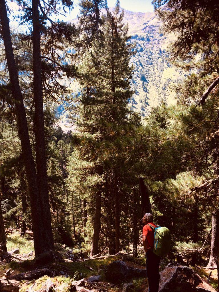 Bergwaldidylle auf dem Weg zum Klettergarten Gailwand im Kaunertal | Climbers Paradise