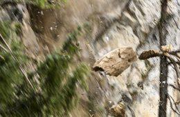 Felsstürze gleich bei der Gefahrenmeldestelle melden, Foto: Mike Gabl | Climbers Paradise
