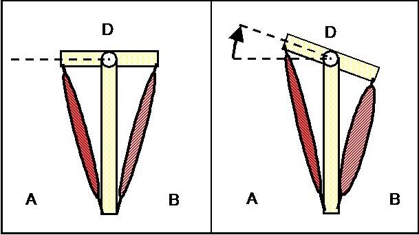 Kletter-Ausgleichsübungen,muskulaere Dysbalance, Quelle: Dr. Klee, Wiki | Climbers Paradise