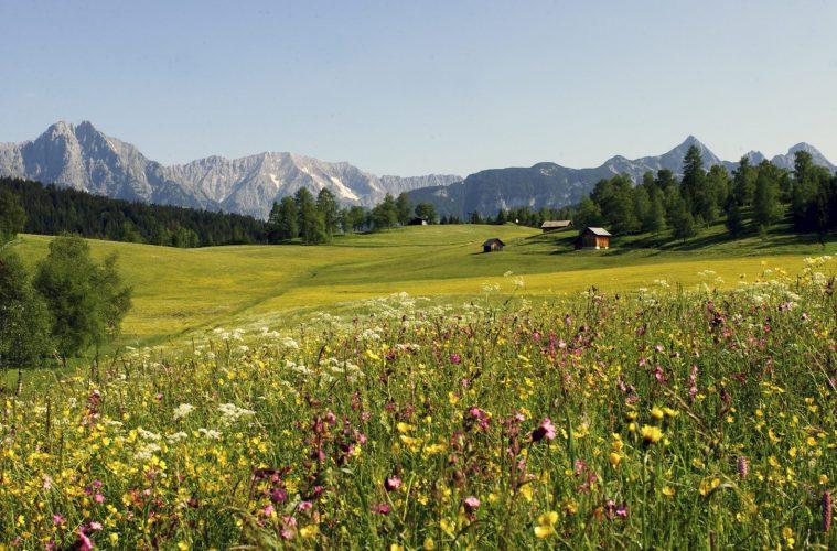 Seefeld - Geigenbühel, Foto: Olympiaregion Seefeld, Heinz Holzknecht |Climbers Paradise
